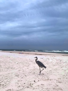 Storm in the Gulf